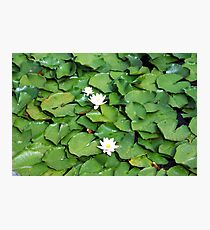 Green Water Lilies Photographic Print