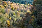 Colours of Perthshire by Cliff Williams