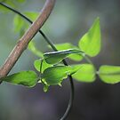 Green and Grey by Astrid Ewing Photography