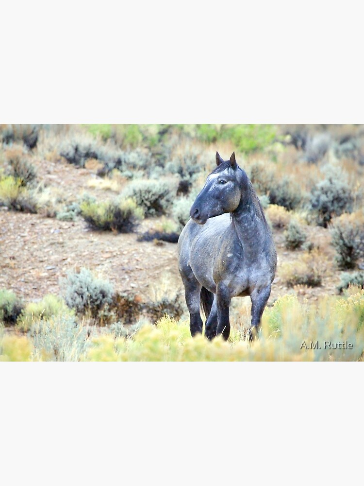 The Watchful Eye - Wild Blue Roan Stallion by annruttle