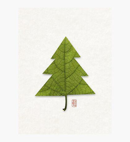 Xmas Leaf Photographic Print
