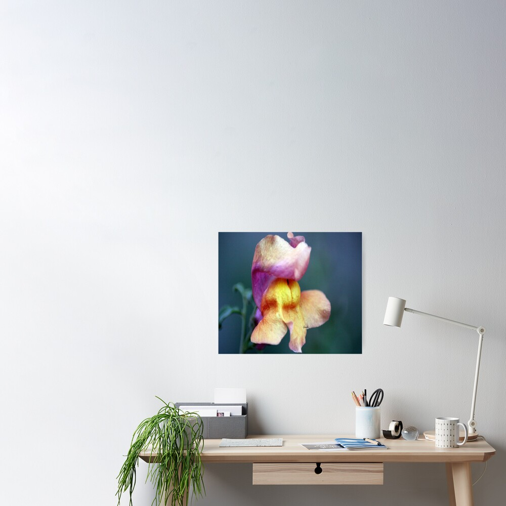 Color Of The Snapdragon Flower Poster