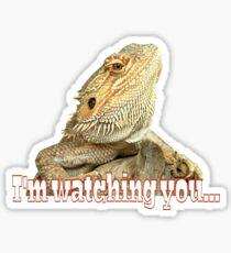 Bearded dragon watching you Sticker