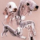 Bedlington Terrier by BarbBarcikKeith