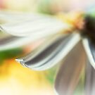 The petal II by Silvia Ganora