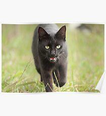 Panther Poster