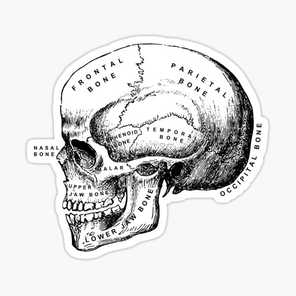 Science of the Head. Sticker