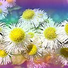 Fleabane Daisy Cluster by Sheri Nye