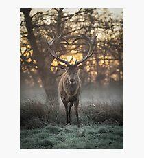 Love you deer lighter print Photographic Print