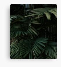 Bunch of palm leaves minimalist Canvas Print
