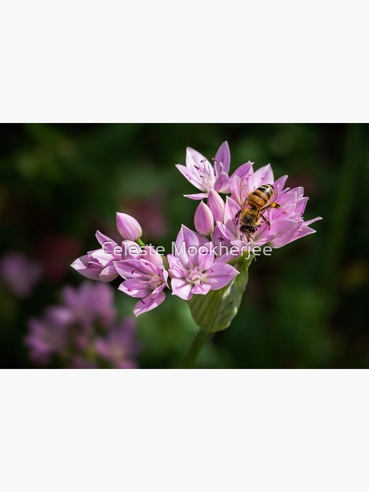 Biene, die Nektar von einer wilden Zwiebelblume trinkt von celestem