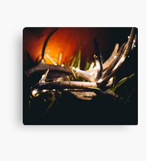 Deer Antlers Minimalist Lights Canvas Print