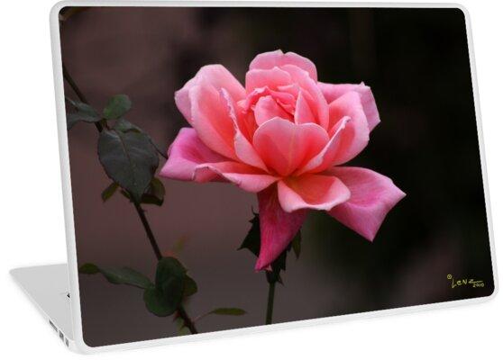 Pink Petals by gemlenz