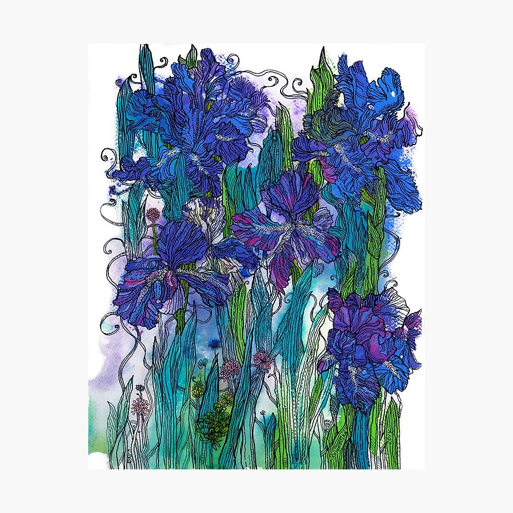 Blue Irises Photographic Print