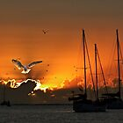 Seagull & Yacht Silhouette at Dawn. by sunnypicsoz
