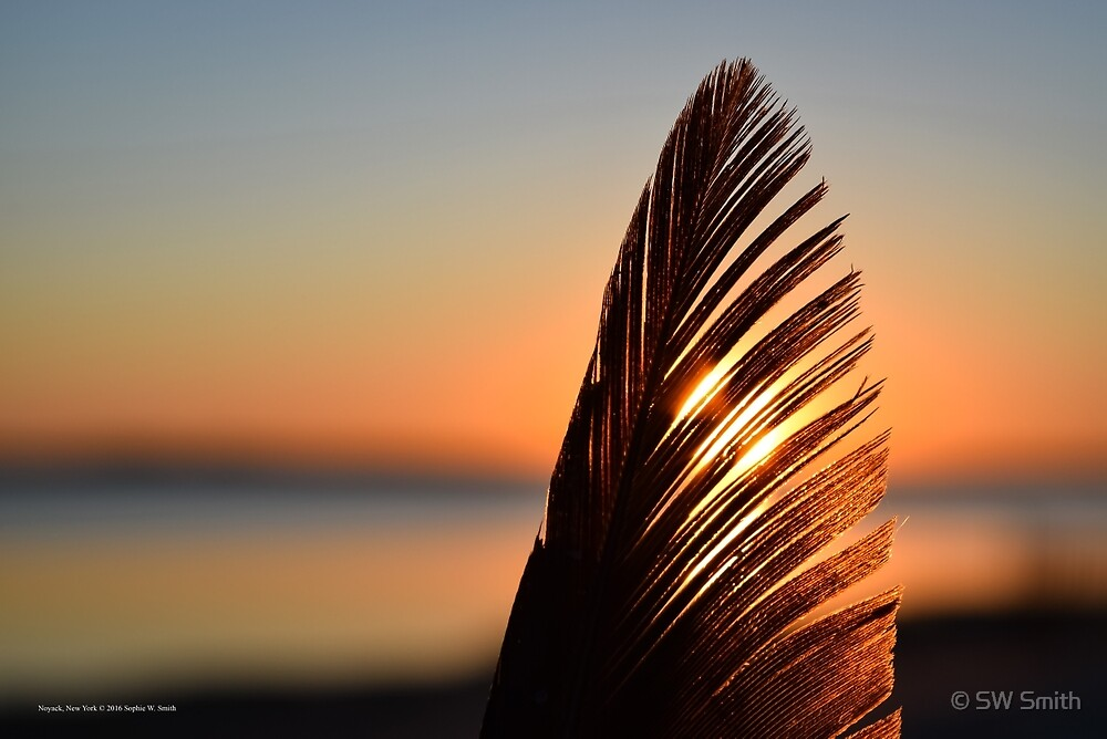 Sunrise Behind A Bird's Feather | Noyack, New York by © Sophie W. Smith