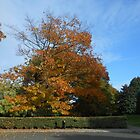 Trees with Autumn Foliage von VoxCeleste