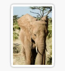 Kenya, Samburu National Reserve, Kenya, African Elephant, February  Sticker