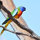 Scarlet-chested Parrot 2 by Seesee