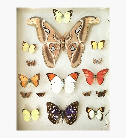 Butterflies and Moths Photographic Print