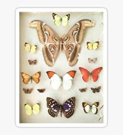 Butterflies and Moths Sticker