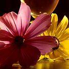 Flowerheads in the Sun by Wayne King