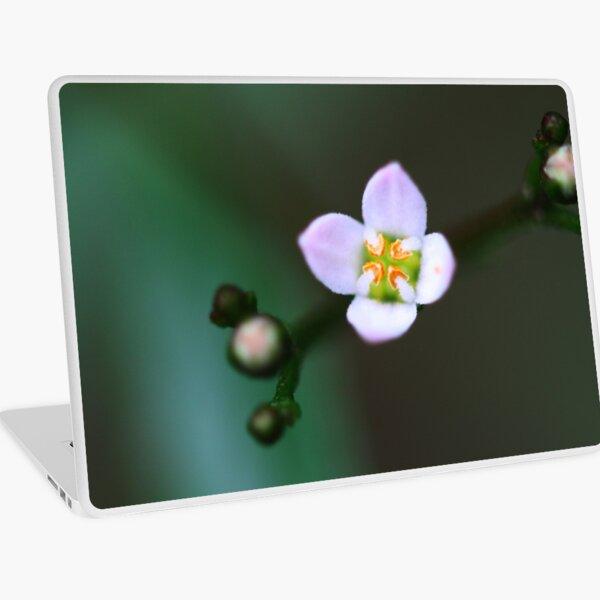 Zieria smithii Laptop Skin