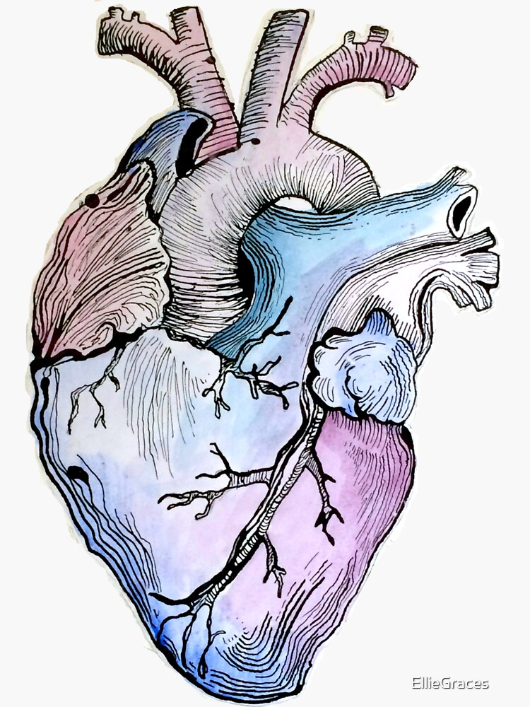Anatomical Blue Heart by EllieGraces