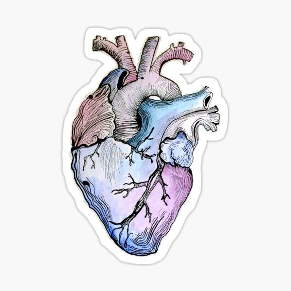 Anatomical Blue Heart Sticker