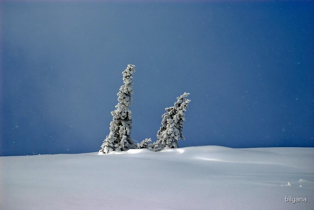 Winter Tale by bilyana