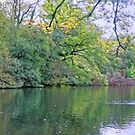 Panorama of a Sussex Lake by Stephen Frost