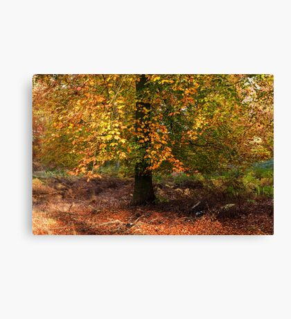 Autumn Colours on Cannock Chase Canvas Print