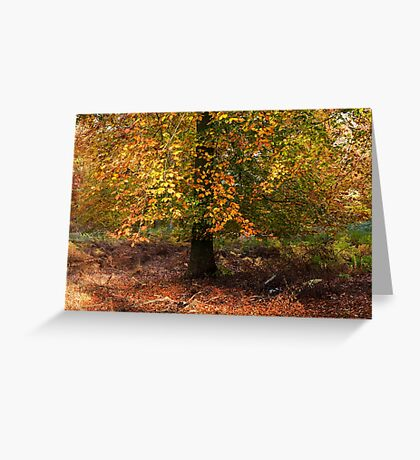 Autumn Colours on Cannock Chase Greeting Card