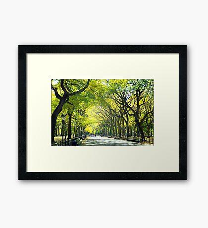 Avenue of Trees - Central Park Framed Print