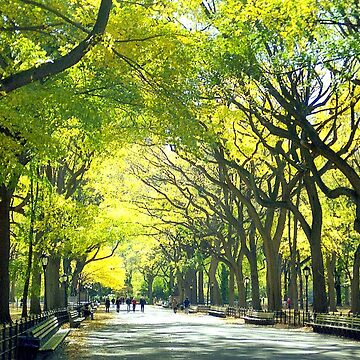 Avenue of Trees - Central Park by biriart