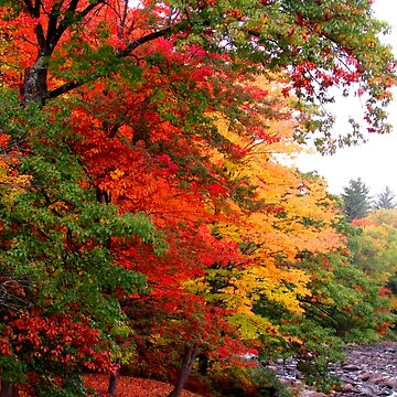 Foliage Along A River In Maine by mainephotobug