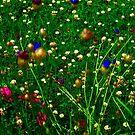 """""""The Field"""" by Elfriede Fulda"""