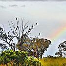 Black Cockatoos and Rainbow. by George Petrovsky