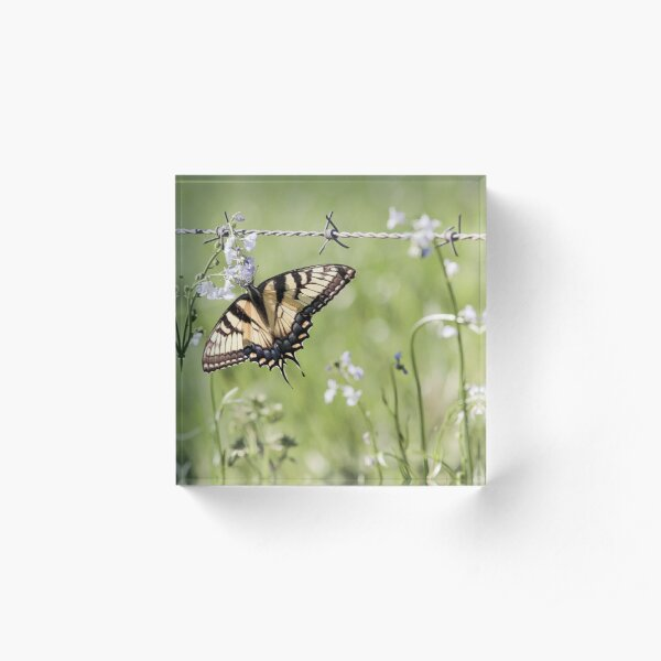 Spring Butterfly Acrylic Block
