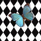 Harlequin Butterfly by Yvette Crocker