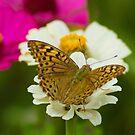 The Butterflies In the Monastery Yard by bilyana