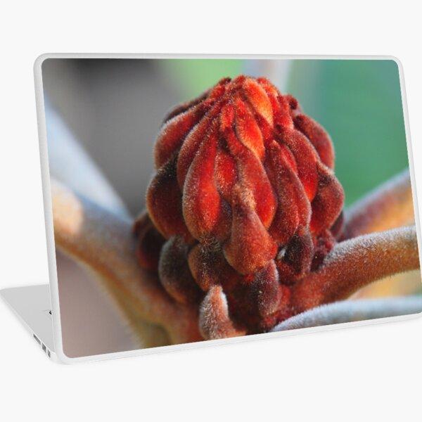 Banksia Robur Laptop Skin