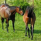 """""""Horses with Attitude no. 4, 'Don't Touch the Coat!'""""... prints and products by Bob Hall©"""