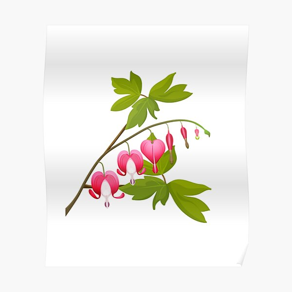 Bleeding heart with leaves Poster