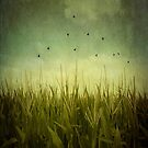 In the Field by Trish Mistric