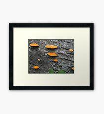 Shelf Fungus Framed Print