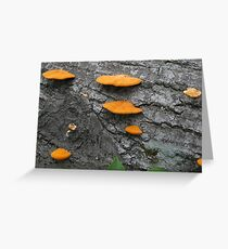 Shelf Fungus Greeting Card