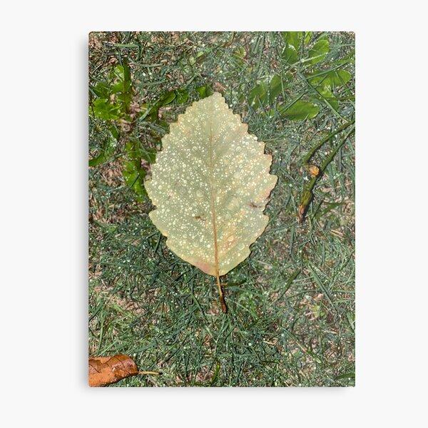 Raindrops on a fallen leaf Metal Print