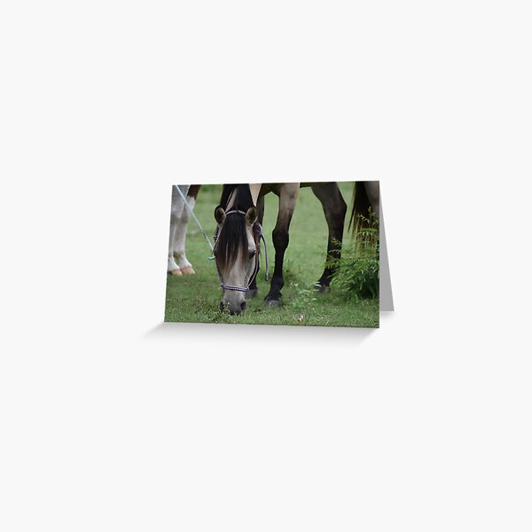 Just a horse Greeting Card