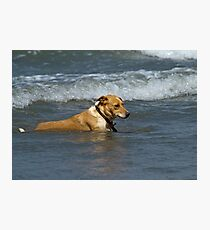 Dog in Shallow Waves Photographic Print